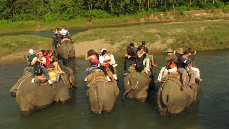 Safari pe elefant
