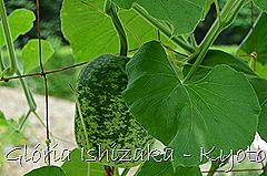 Glória Ishizaka -   Kyoto Botanical Garden 2012 - 73