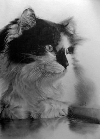Desenho de gato feito à lápis