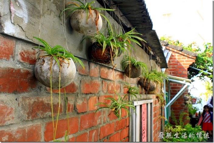 台南-花貓在顧的店。牆壁上的盆栽。