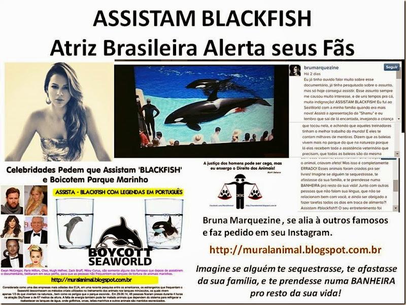 ASSISTAM BLACKFISH Marquezine