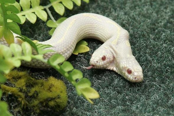 gal-land-snake1-600x400