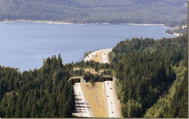 Ponts pour animaux - passages à faune (7)
