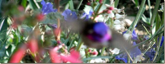hummer! 2-29-2012 9-03-06 AM 3616x1395