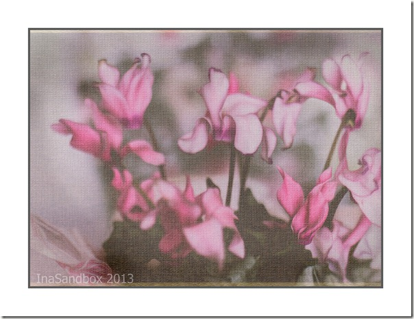 Cyclamen with pdpa rice paper texture