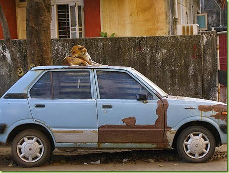 dog on top of car
