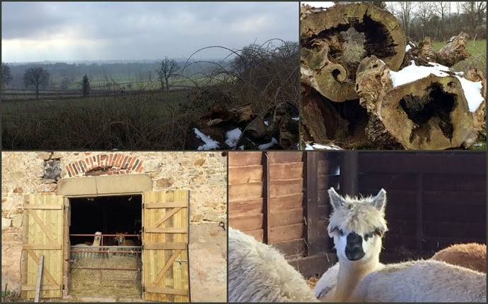 Les Lamas du Tilloux1