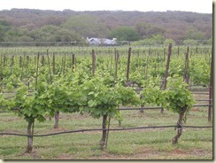 800px-Texas_Hills_vineyard