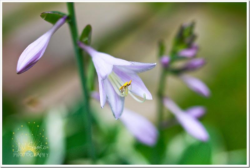 flowers-6016