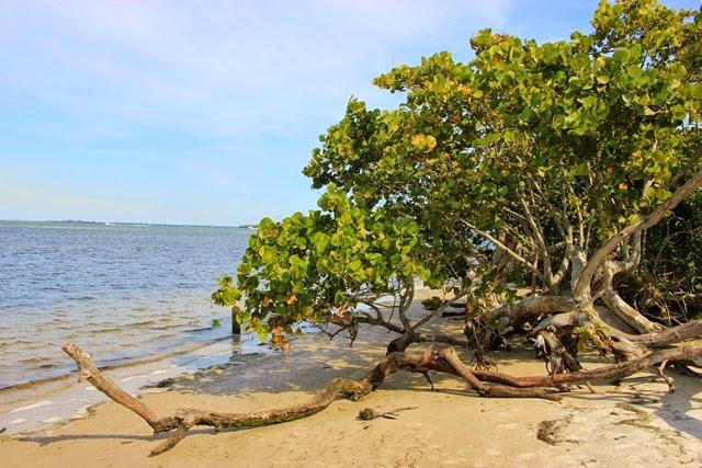 Robinson Preserve Beach