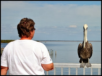 07 - from one pelican to another pelican