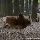 Wildpark-PF_2012-04-29_974.JPG