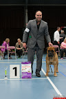 20130511-BMCN-Bullmastiff-Championship-Clubmatch-2329.jpg