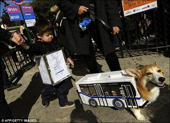 This corgi, dressed as an M23 New York bus, and his owner Ben, whose child was in on the costume, won 'Best in Show' at the event