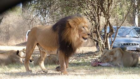 Maria Sa Leul la Lion Park