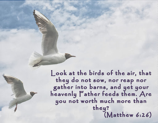 Matthew 6 26 Father feeds them.jpg