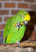 2013-5-papagaai-rode-loper3.jpg