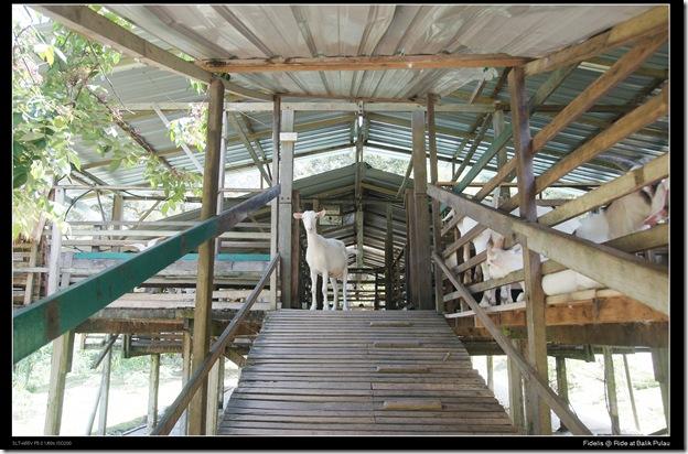 Ride Balike Pulau22