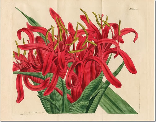 NERAM Australian flora