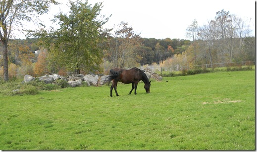 Fall at Jean's with horses. 078