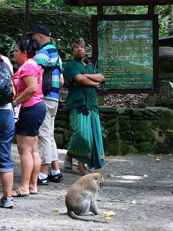Jobs in Bali: monkey expert