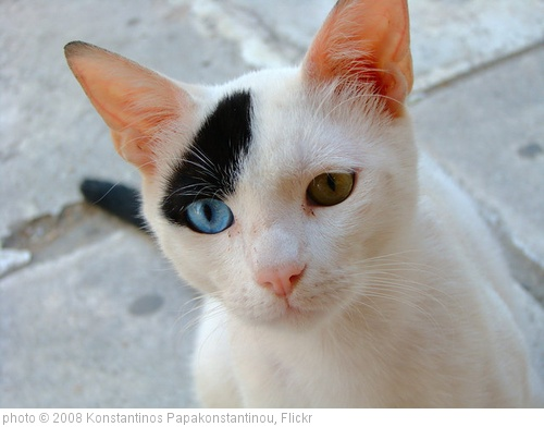 'Odd-eyed cat' photo (c) 2008, Konstantinos Papakonstantinou - license: http://creativecommons.org/licenses/by-sa/2.0/