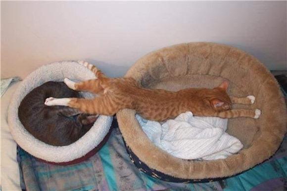 Cats Will Sleep Anywhere 07