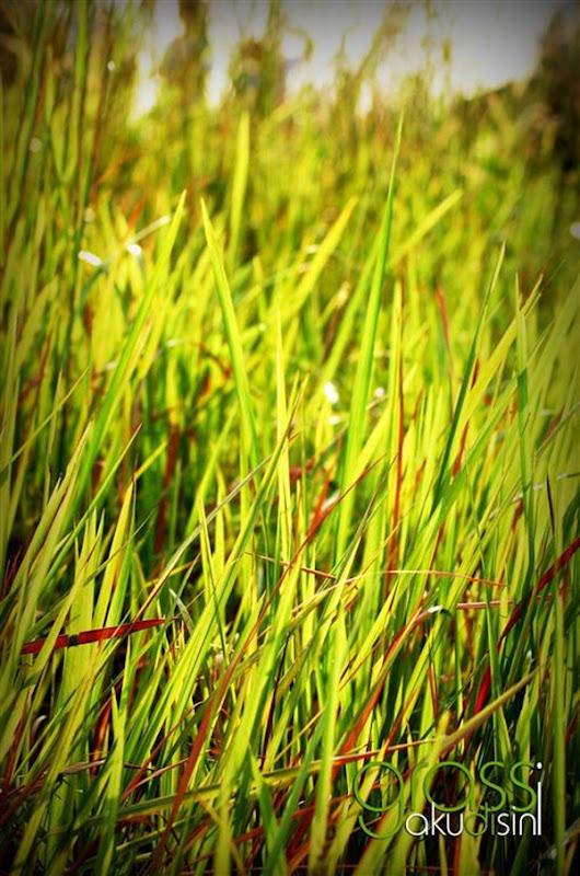 grass (Medium)