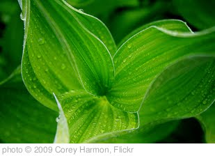 'Green Plant' photo (c) 2009, Corey Harmon - license: http://creativecommons.org/licenses/by-nd/2.0/