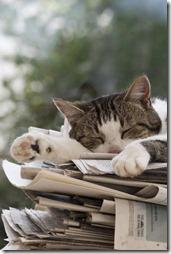 10 -Fotos de gato buscoimagenes (25)