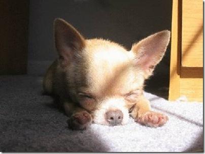 Animal cãoengraçado (3)
