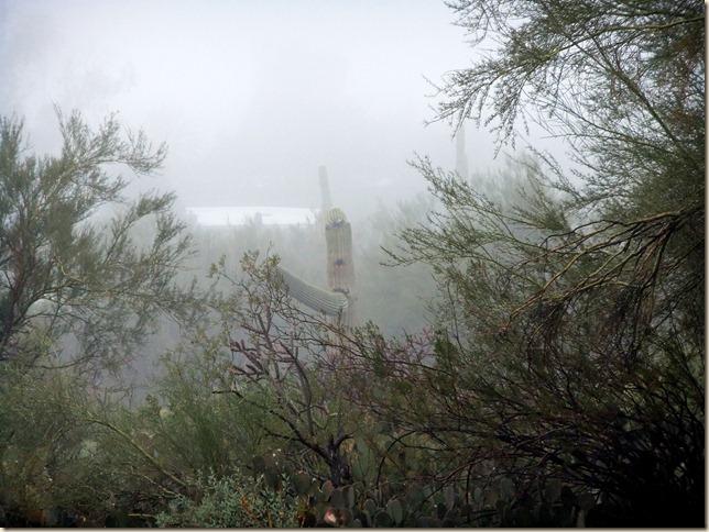 backyard in fog 12-4-2011 8-31-49 AM 3616x2712