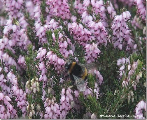 15-bumblebee