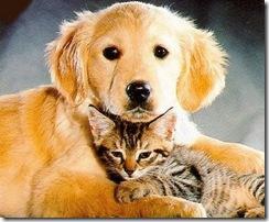 Se inicia la campaña de vacunación antirrábica para perros y gatos