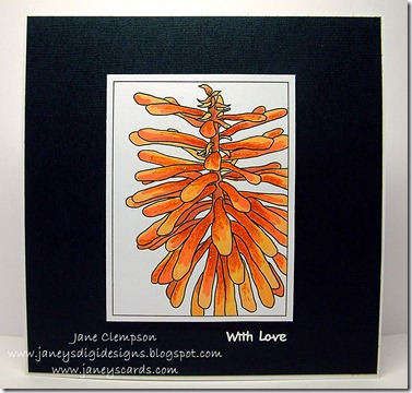 Red Hot Poker Card