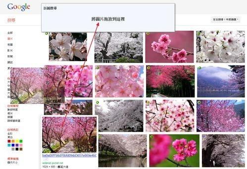google image search-01