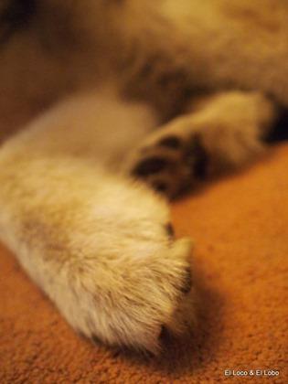 Munson paws