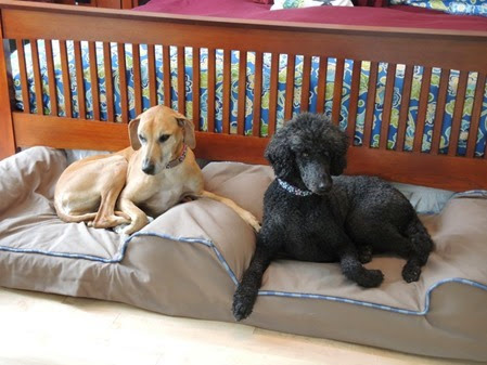 20141216_135123-dog-bed