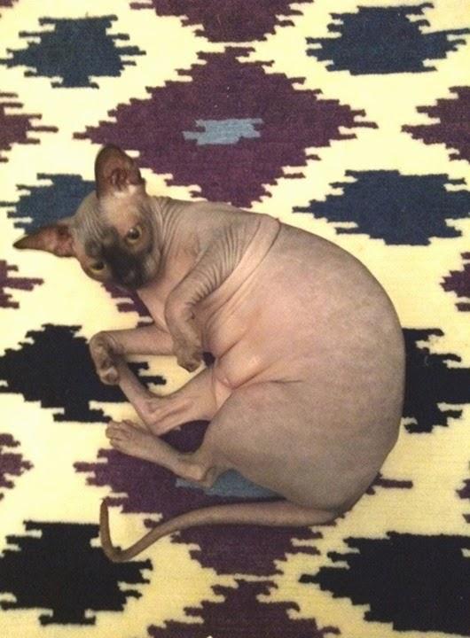 master- rug sample edie
