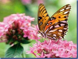 Asas-de-borboletas-podem-ser-futuramente-usadas-para-gerar-eletricidade-a-partir-da-energia-solar-Imagem