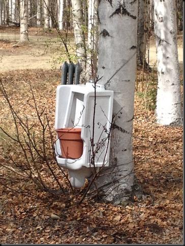urinal planter