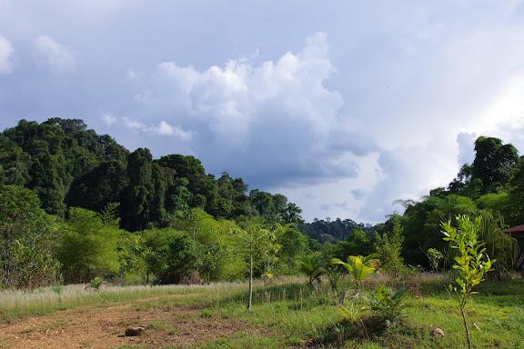 Reforestation. Carbets de Coralie (Petit Yaoni), 29 octobre 2012. Photo : J.-M. Gayman