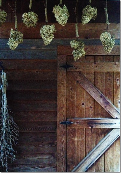 drying hydrangeas photography by Lee Wolfe