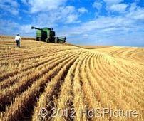 pertanian di Amerika Serikat