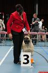 20130510-Bullmastiff-Worldcup-0596.jpg