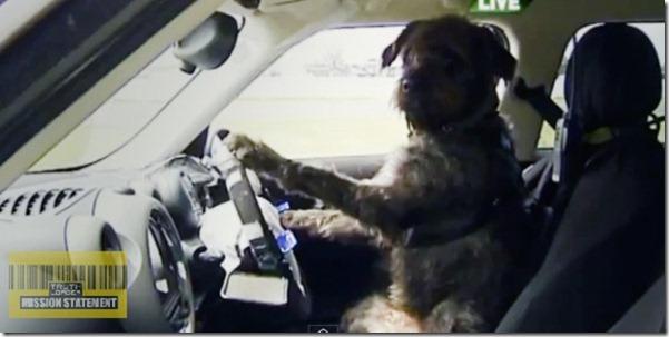12_06_cachorro_motorista2