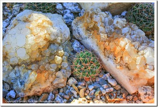 131203_TucsonBotanicalGarden_036