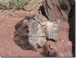 2012-04-15 Petrified Wood, Fry Canyon, UT (11)