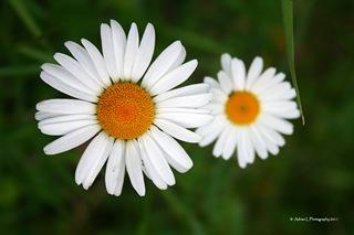 Wild-Flower3