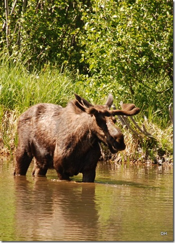 06-08-13 A Moose Wilson Road (86)a